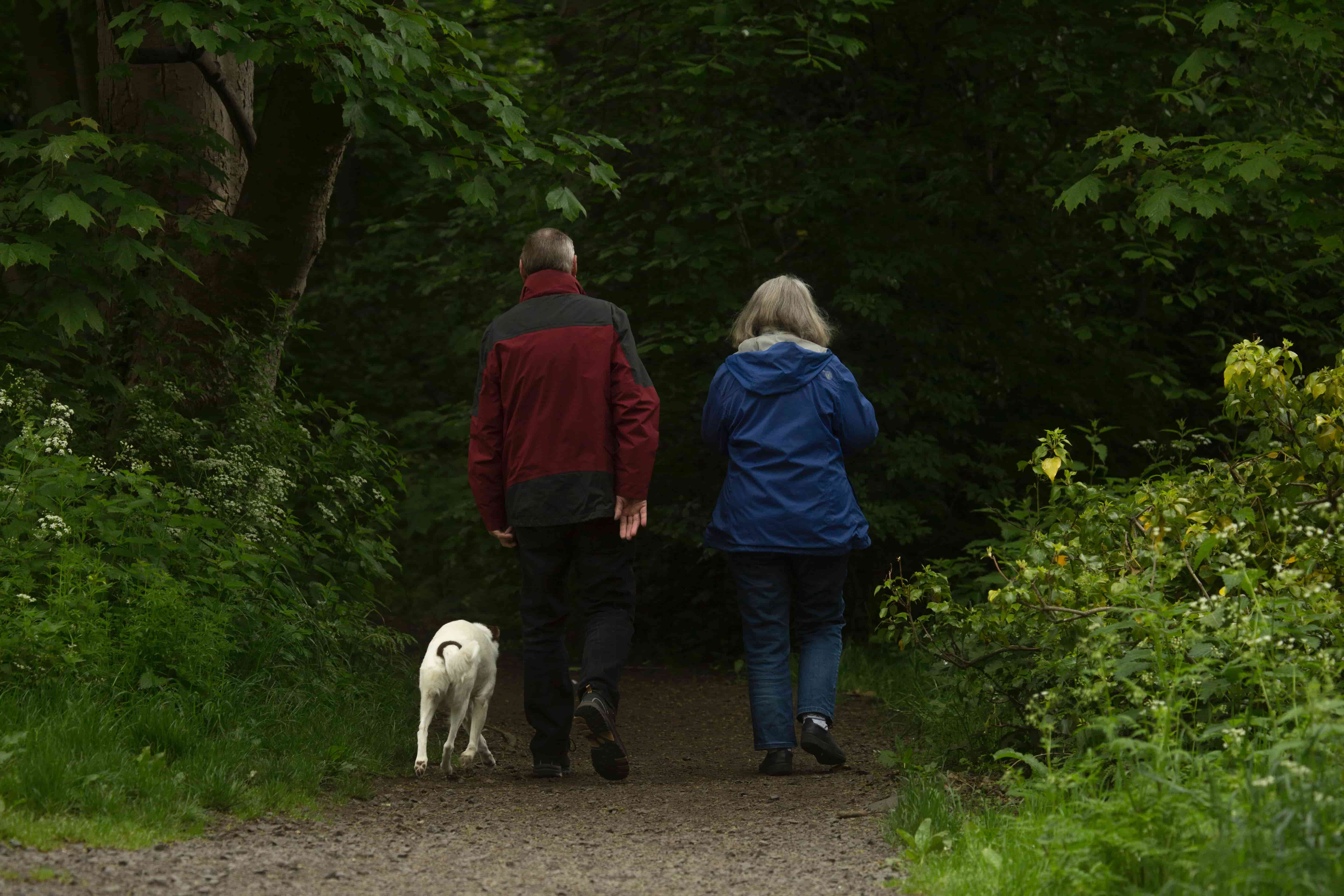 The back view of an older man and female walking a golden Labrador in the woods.
