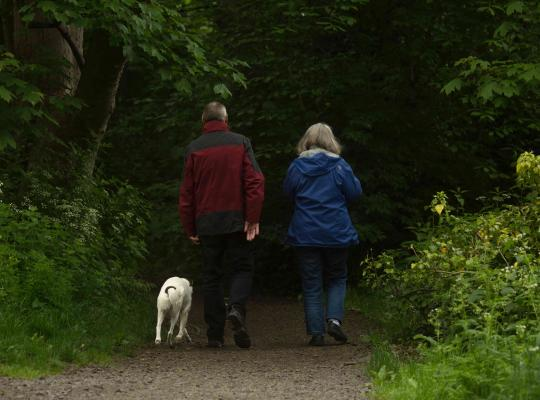 The back view of a retired older man and female walking a golden Labrador in the woods.